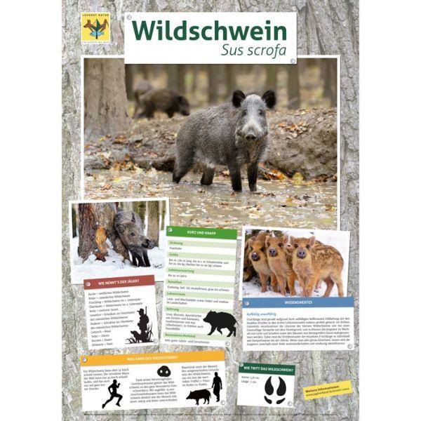 Lernort Natur-Tierposter Wildschwein NEU