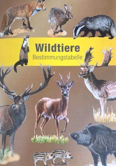 Unser Wild / Wildtiere