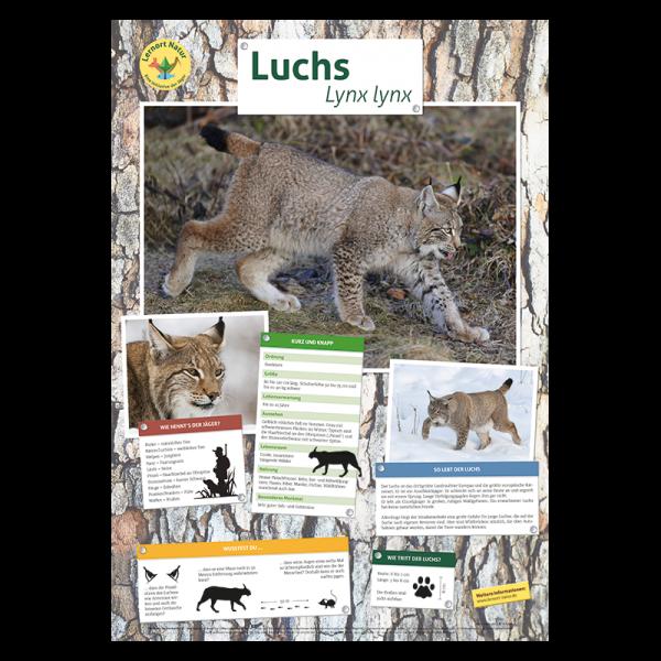Lernort Natur Tierposter Luchs