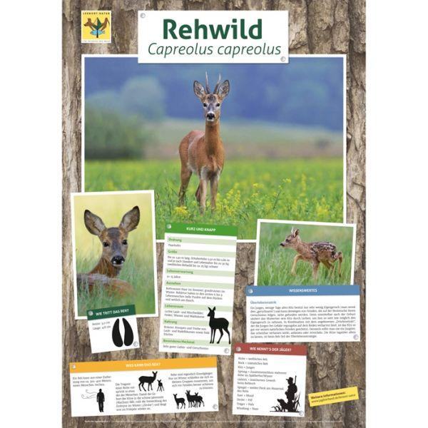 Lernort Natur-Tierposter Rehwild NEU