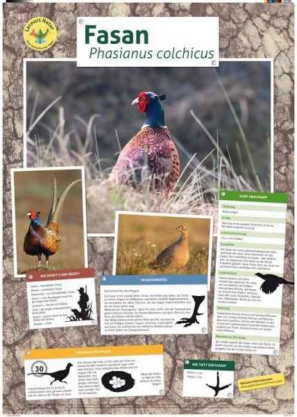 Lernort Natur Tierposter Fasan