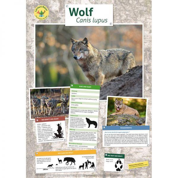 Lernort Natur-Tierposter Wolf