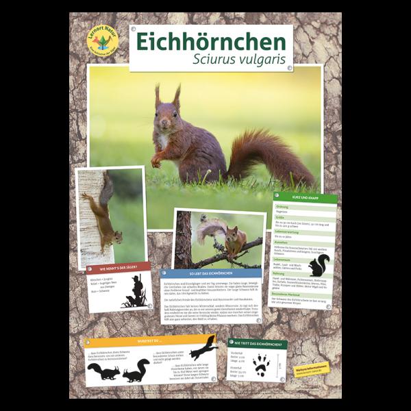 Lernort Natur Tierposter Eichhörnchen