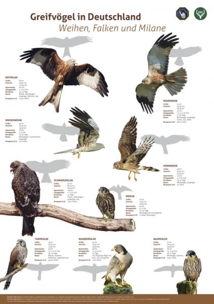 Lernort Natur-Tierposter Weihen, Falken und Milane