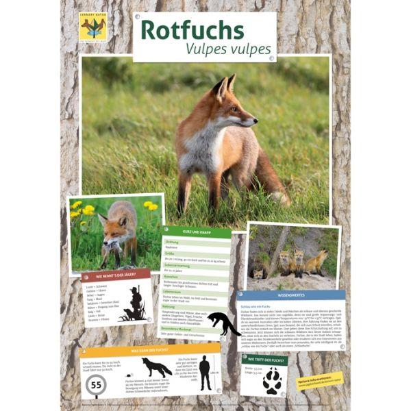 Lernort Natur-Tierposter Fuchs NEU
