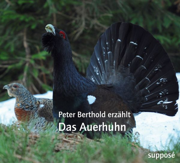 "Audio-CD´s ""Das Auerhuhn"""