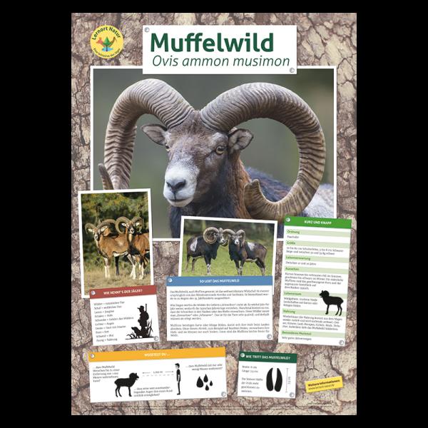 Lernort Natur Tierposter Muffelwild