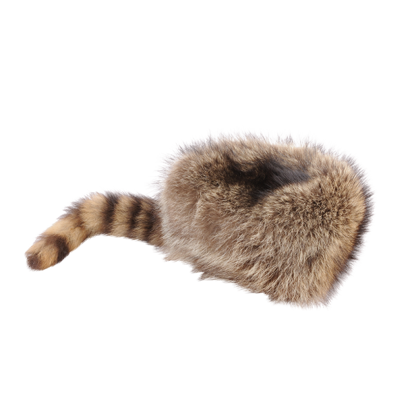 Fellwechsel - Trappermütze Waschbär