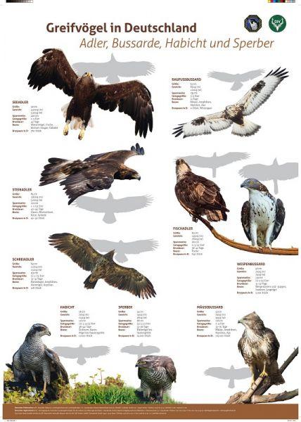 Lernort Natur-Tierposter Adler, Bussarde, Habicht, Sperber