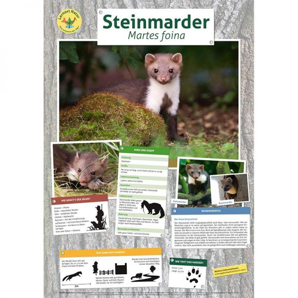 Lernort Natur-Tierposter Marder NEU